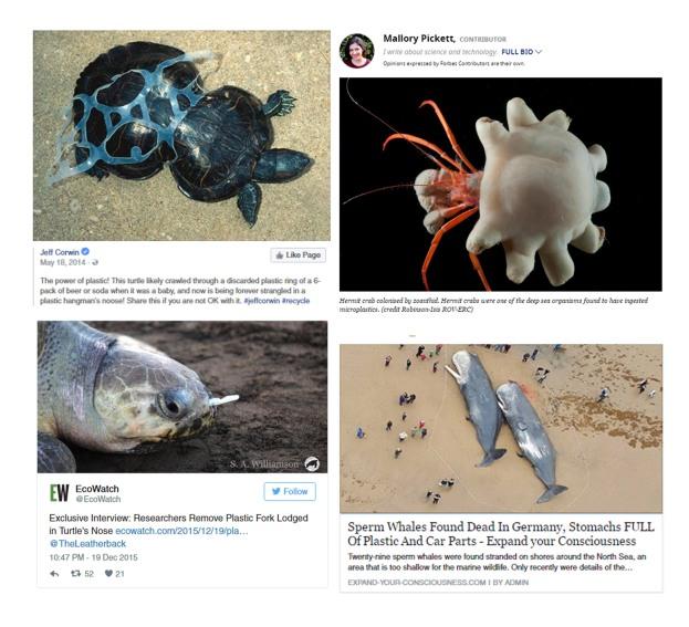 sea life with plastic.jpg